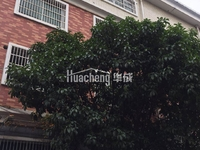 青岩刘淘宝村稀缺2间4层半有天有地垂直楼证件齐全 可随时过户 年租15万左右急急